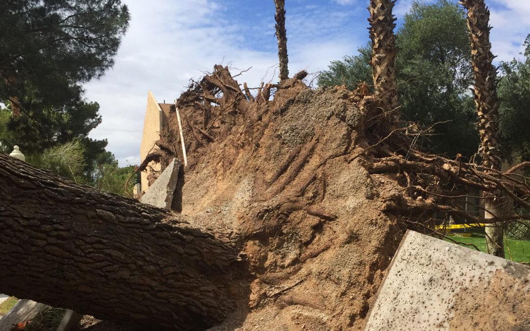 Emergency & Storm Damage