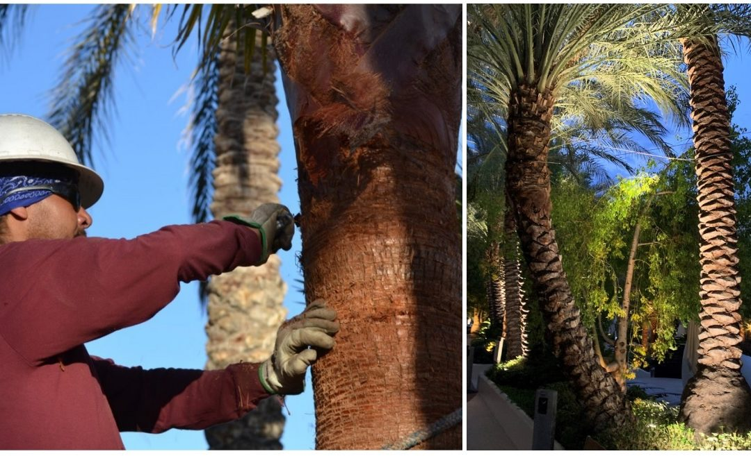 Start Thinking About Palm Tree Skinning Now!
