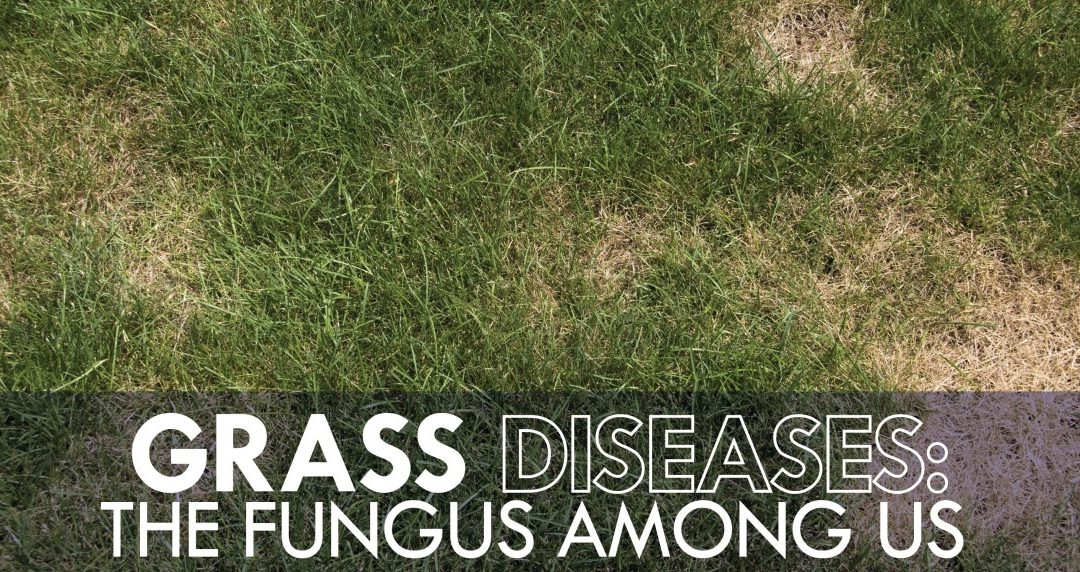 Lawn Fungus? Problem Solved!