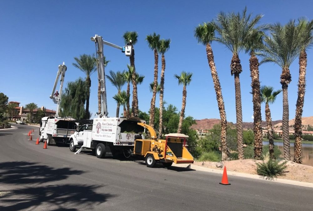 WHY CHOOSE AN ACCREDITED TREE CARE COMPANY?