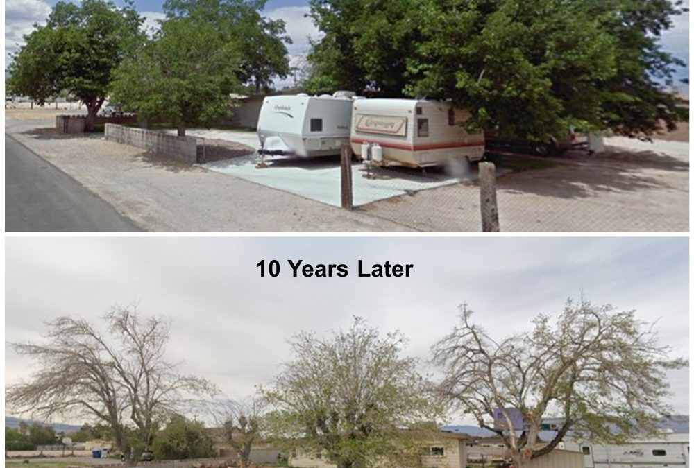 THE IMPORTANCE OF PROPER TREE CARE