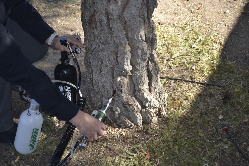 TREE INJECTION TECHNOLOGY
