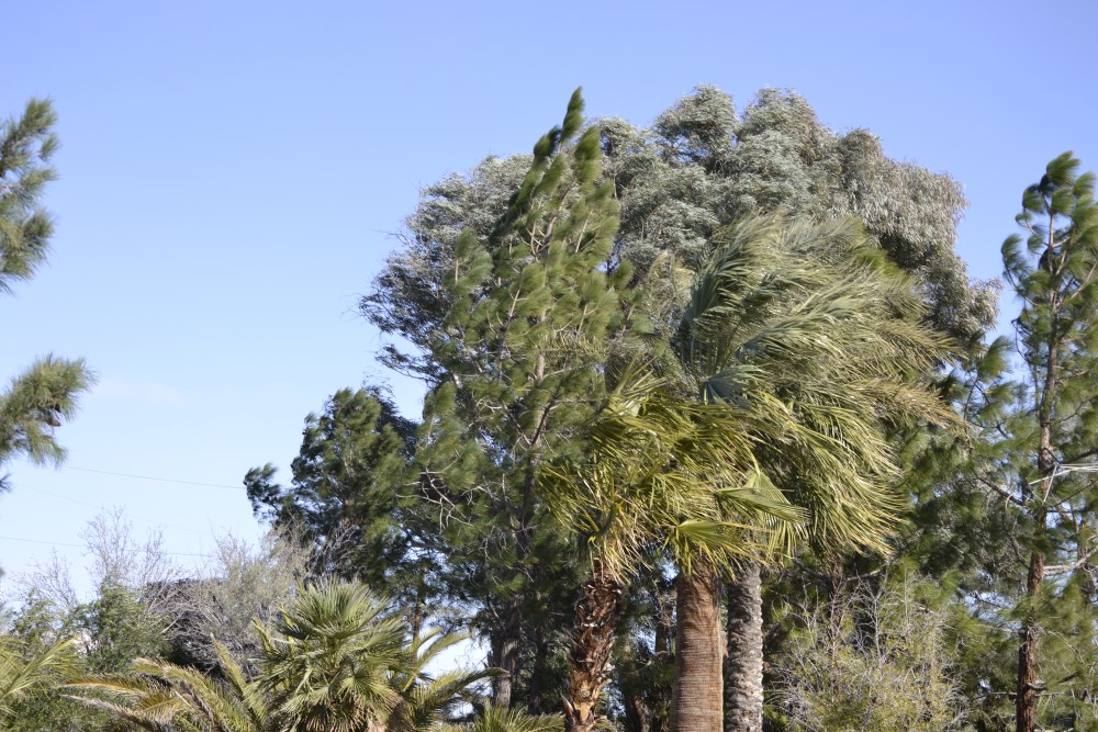 PLANT HEALTH ON WINDY DAYS